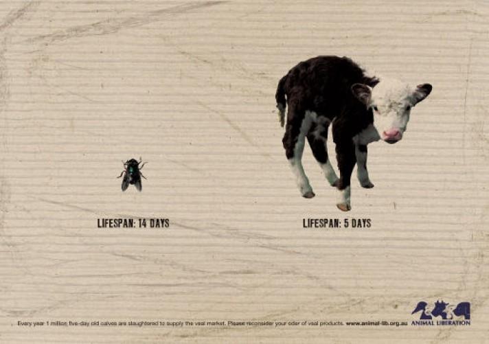 Animal Liberation in Australia