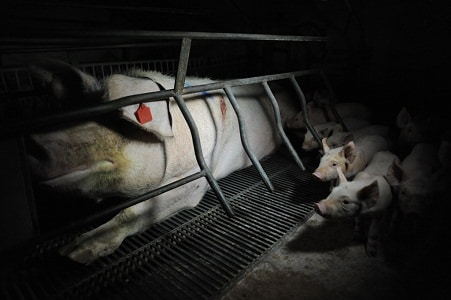 Photo Credit | Jo-Anne McArthur / WeAnimals