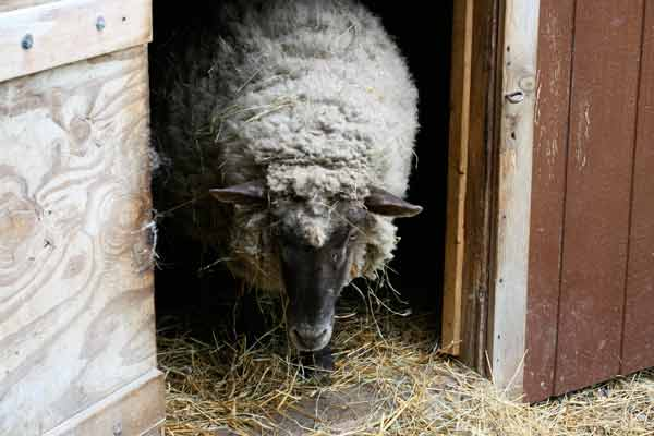 Happy Trails Farm Animal Sanctuary: Giving Abused and Neglected Animals a Second Chance