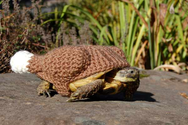 Tortoise Sweaters Really Exist, and They're Suprisingly Speciesist
