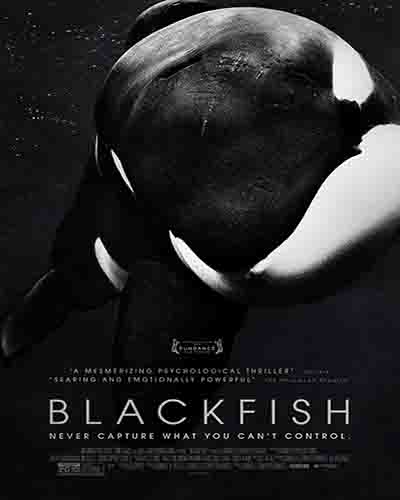 Cover for the film, Blackfish. Features a killer whale face on a dark background.