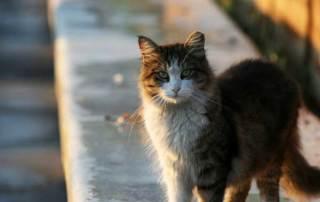 stray-cat