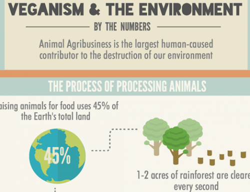 Veganism & the Environment (INFOGRAPHIC)
