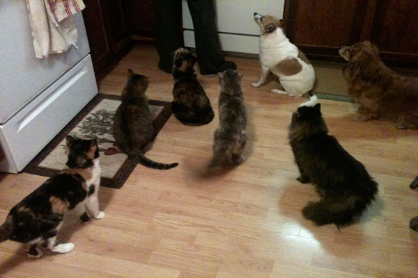 Image of feeding rescue cats