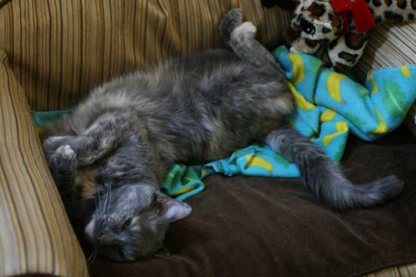 Image of rescue cat Gypsy