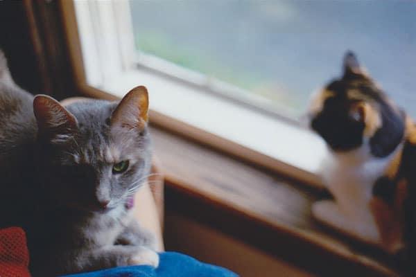Image of rescue cat Kitten