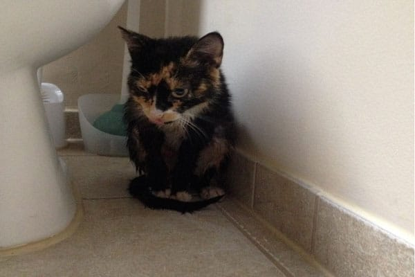 picture of cat rescue tully banks