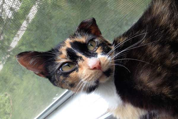 Image of rescue cat Tully Banks