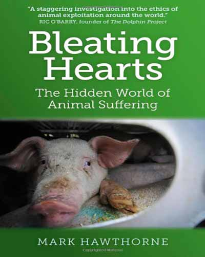 The cover of the book Bleating Hearts. Features a picture of a pig on a transport truck looking through an air hole.