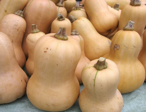Nutrition Spotlight: Butternut Squash. Cheap and Easy to Find, But Will You Really Cook It?