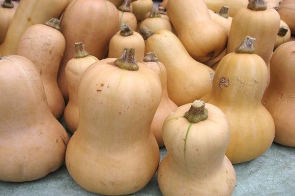 Nutrition Spotlight: Butternut Squash