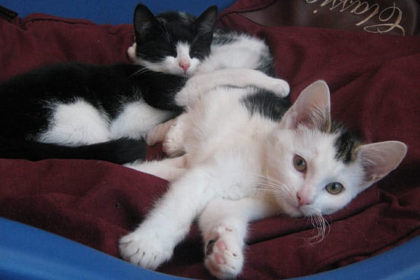 The Healing Power of Cats (Does Cat Purring Really Work?)