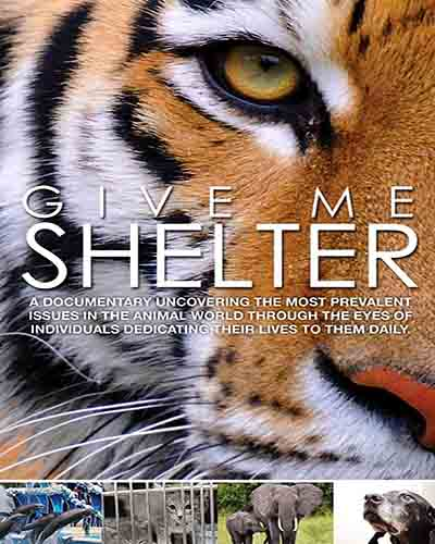Cover for the film, Give Me Shelter. Features a close-up of a tiger.