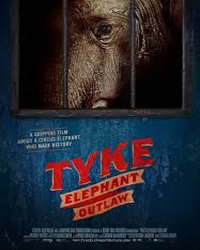 Cover for the film, Tyke Elephant Outlaw. Features a picture of an elephant behind bars staring out.