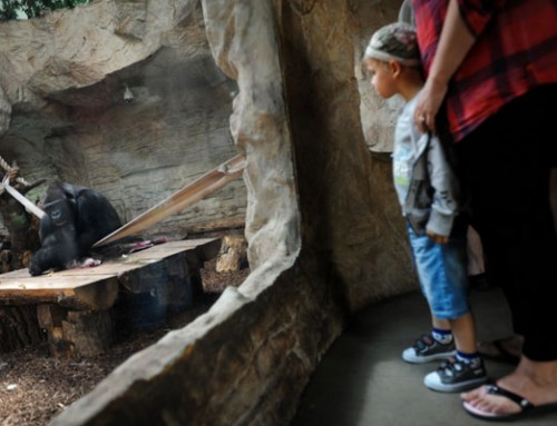 6 Activities to do with Kids Instead of Going to the Zoo