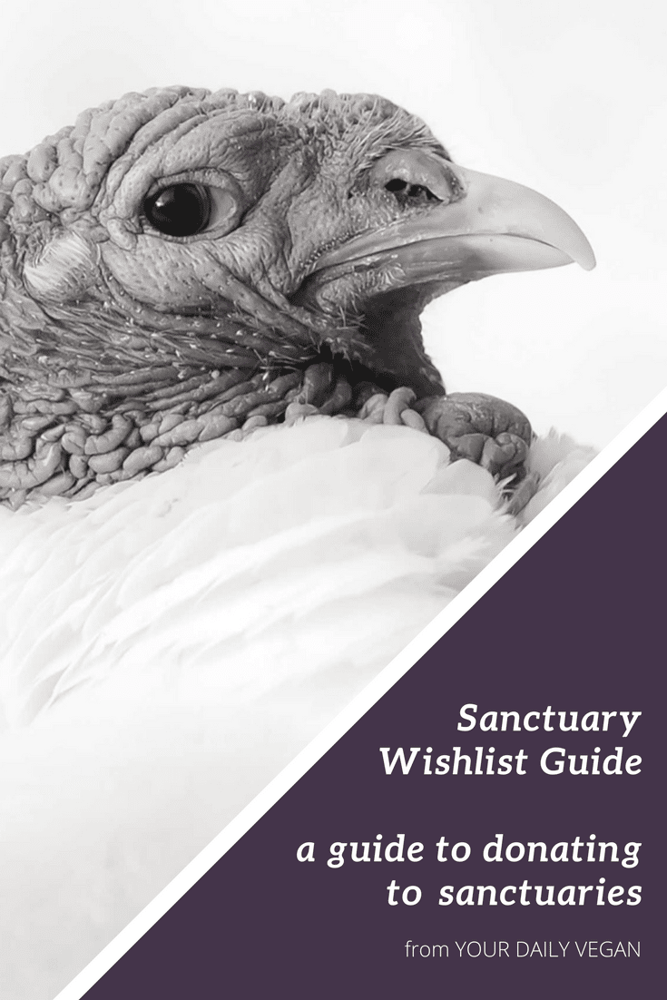 "A image showing a profile picture of a turkey and the words ""sanctuary wishlist guide."""