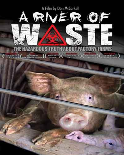 A cover of the film A River of Waste. Features a close-up of several pigs in a factory farmed setting.