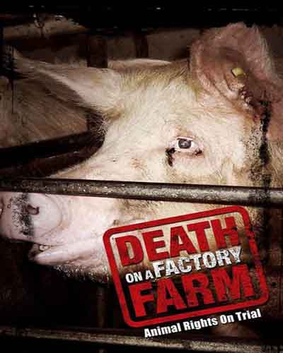Cover for the film, Death on a Factory Farm featuring a closeup of a pig on a factory farm.