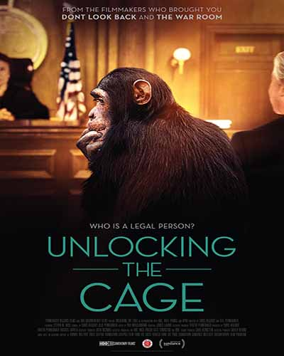 Cover for the film, Unlocking the Cage featuring a chimpanzee sitting in a courtroom