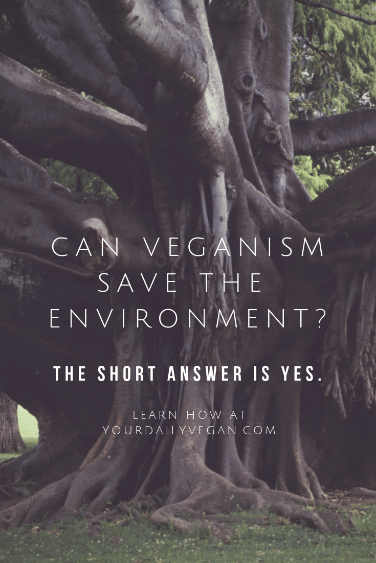 Veganism & the Environment Guide - Your Daily Vegan