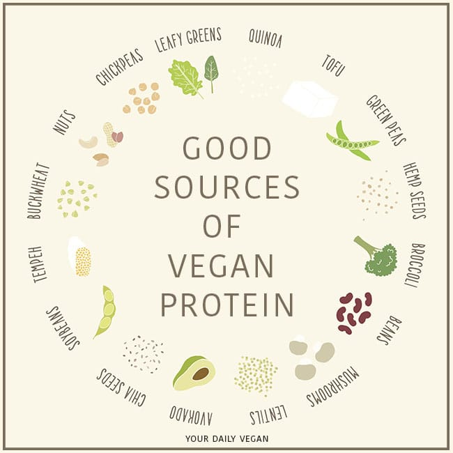 Vegan Sources of Protein - Vegan Protein Guide - Your Daily Vegan
