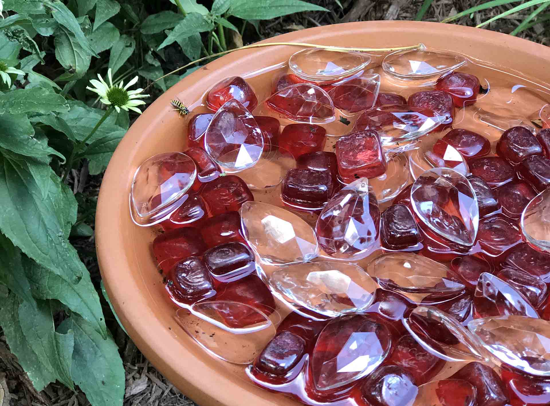 A closeup of a bee bath featuring a terra cotta plate with red glass pebbles along the bottom sitting in the garden with a bee drinking on one side.
