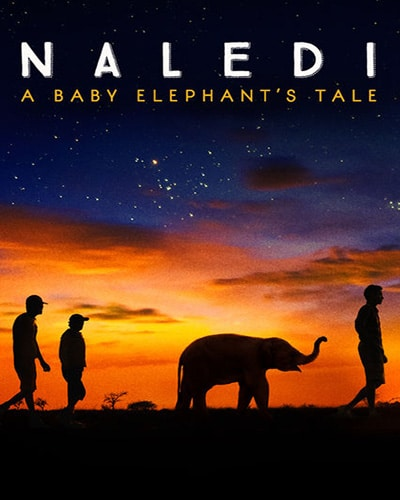 Cover for the film, Naledi: A Baby Elephant's Tale. Features a picture of three humans and one baby elephant silhouettes walking in the early morning light.