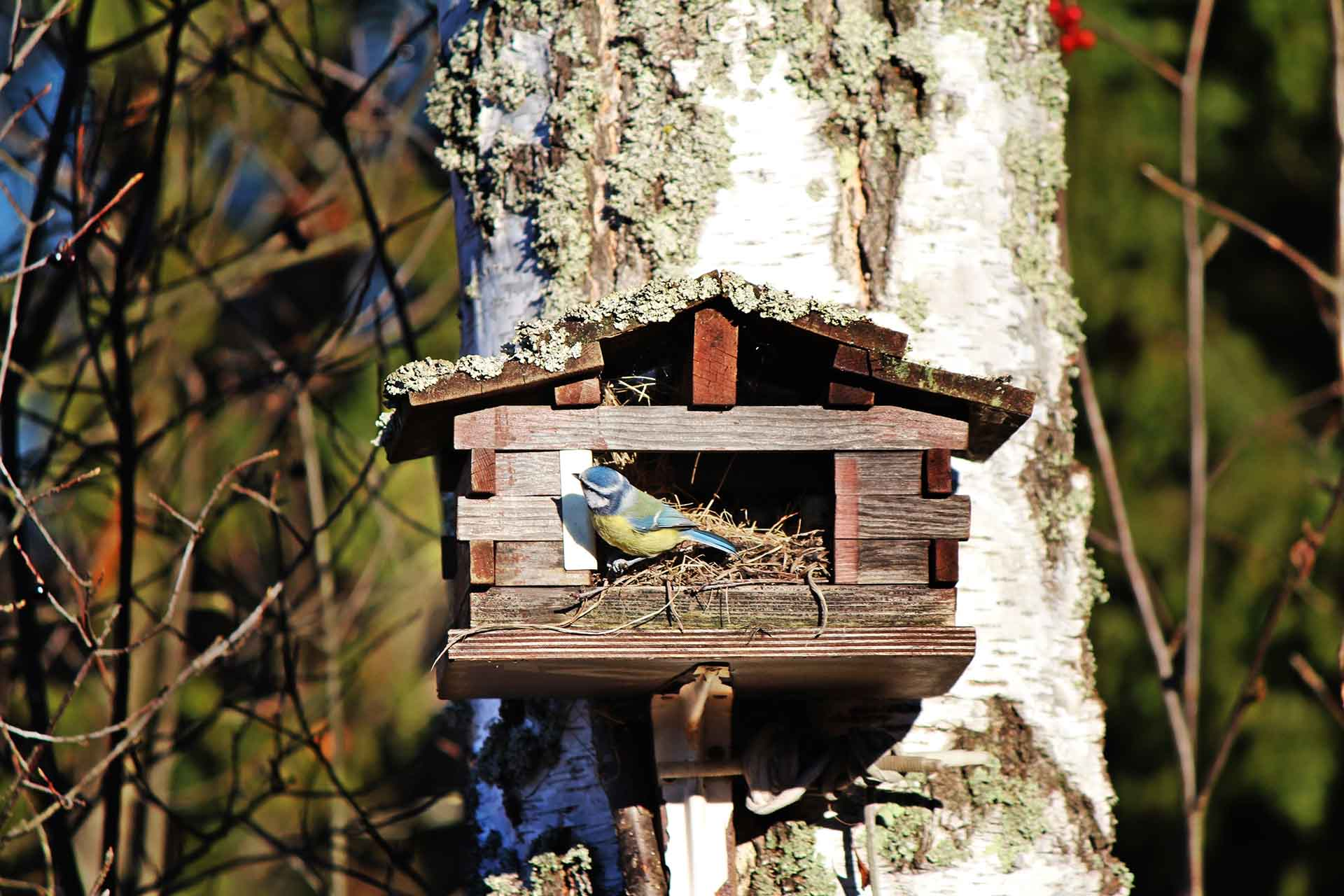 Wooden birdhouse on a tree with a bird sitting inside it.