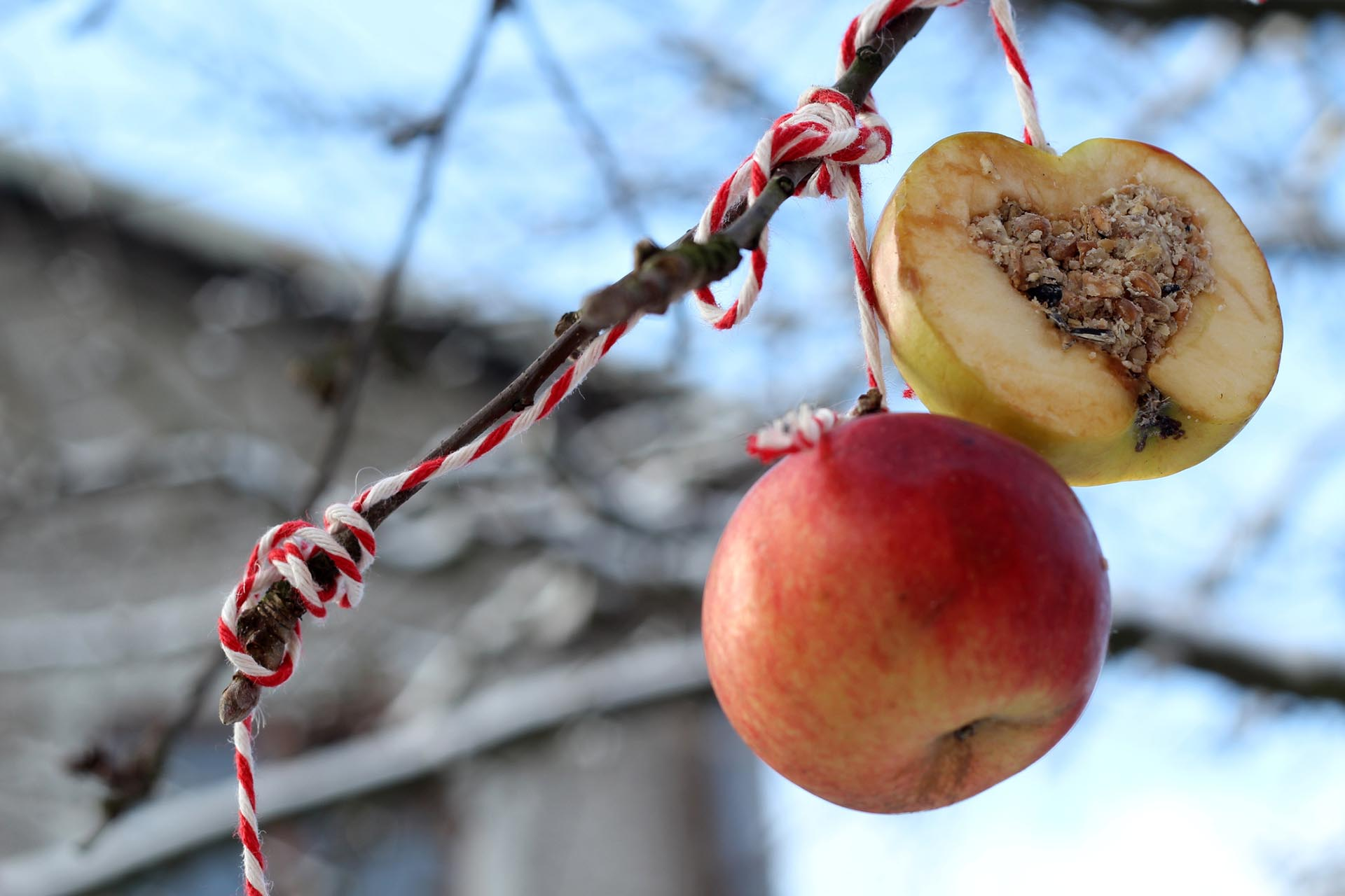 A homemade hanging suet made from an apple hanging from a tree branch.