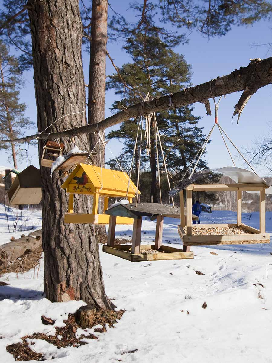 Winter landscape with bird feeders and trough for animals and birds in a pine forest bright sunny day