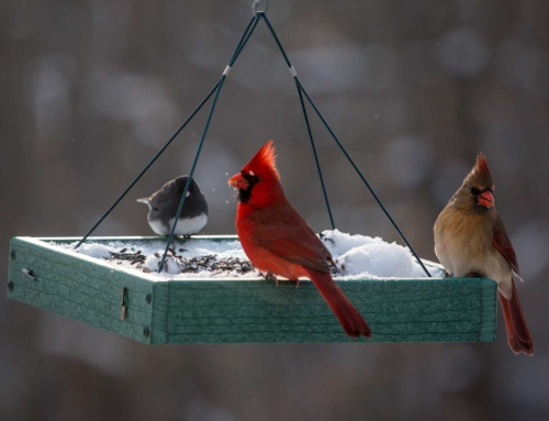 How (and Why) to Clean Your Winter Bird Feeder