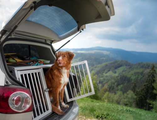 Tips for Traveling with Dogs & Cats