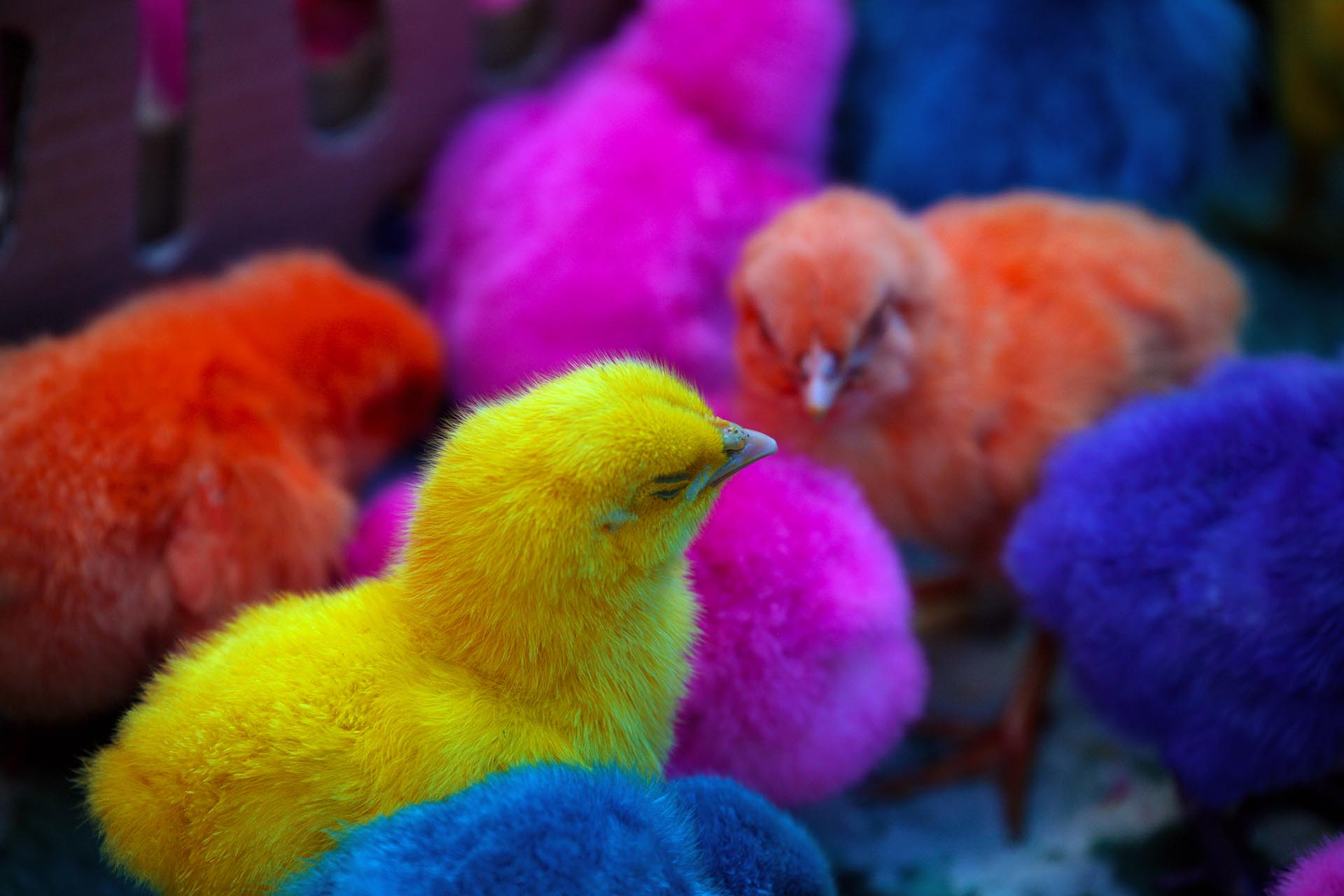 A close up of a box of brightly-colored chicks.