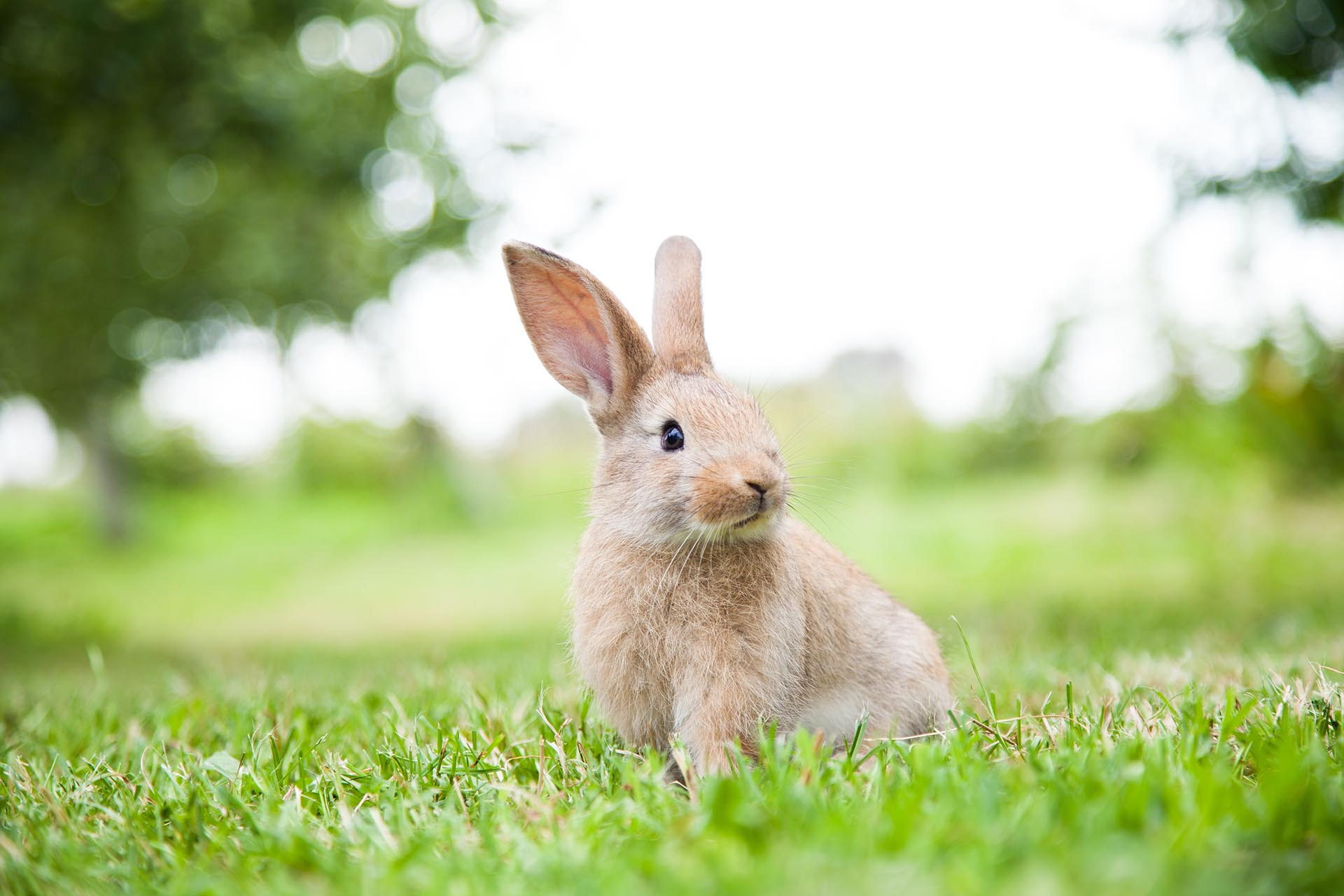 Bunny rabbit on the grass.