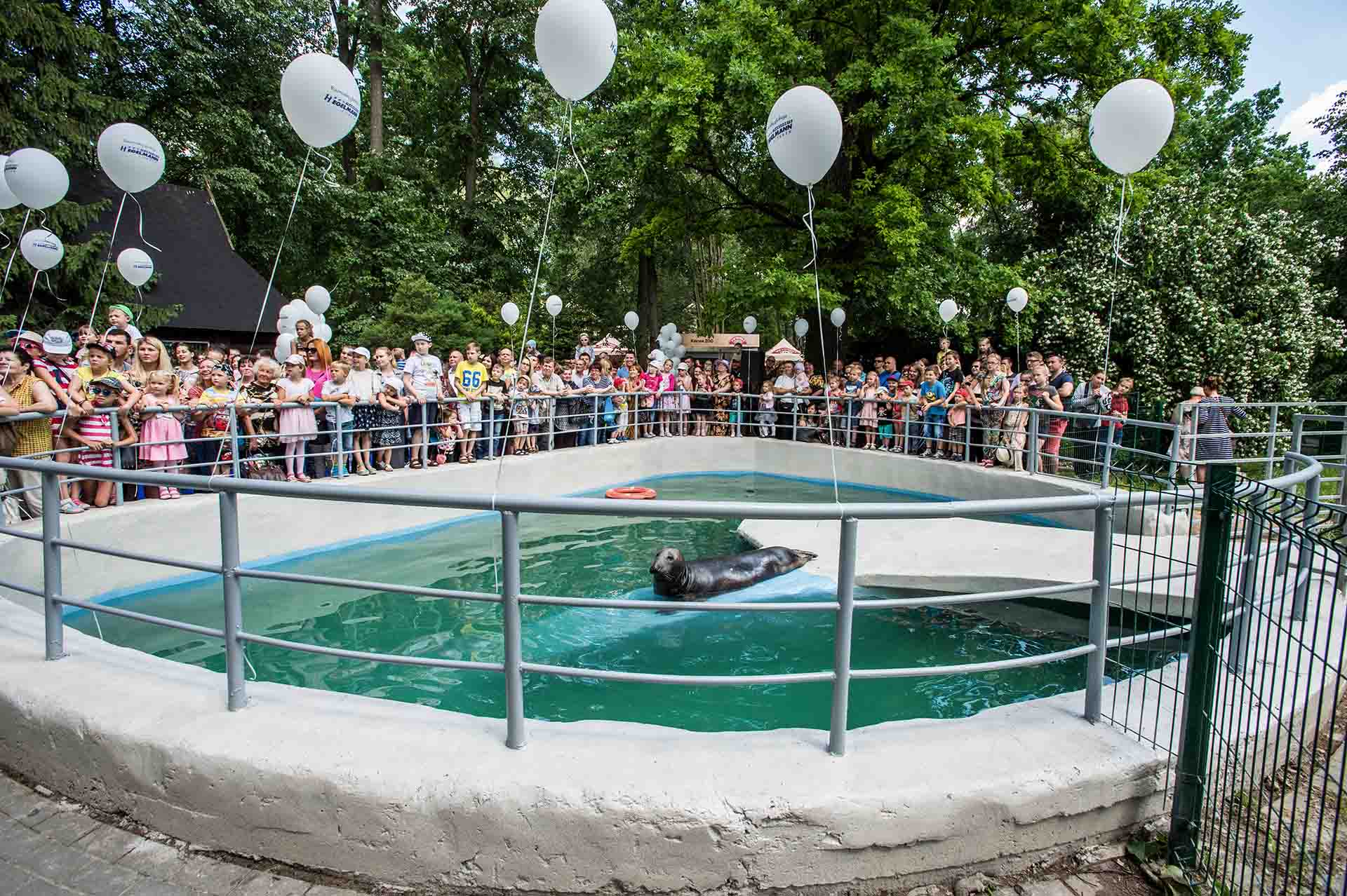 Baltic Grey Seal On Display At A Zoo In Lithuania