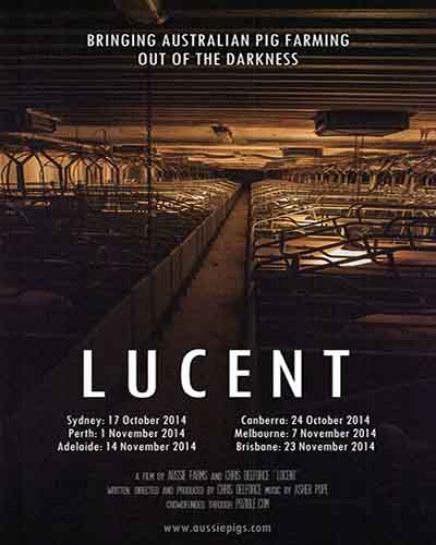 Cover for the film, Lucent featuring rows of pigs in farrowing crates