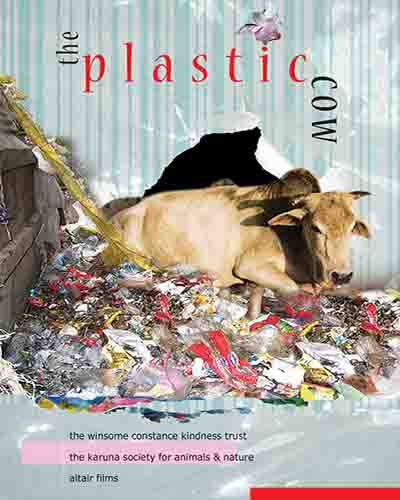 Cover for the film, The Plastic Cow featuring a cow sitting in a pile of plastic